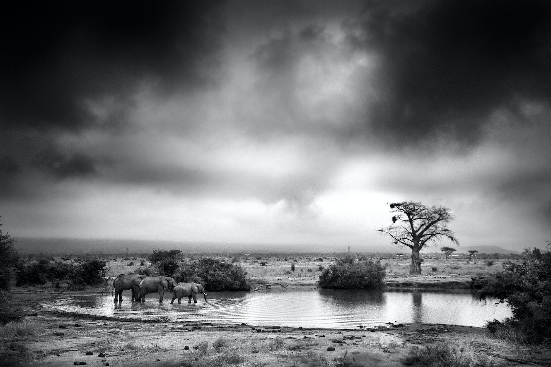 Visions of Kenya